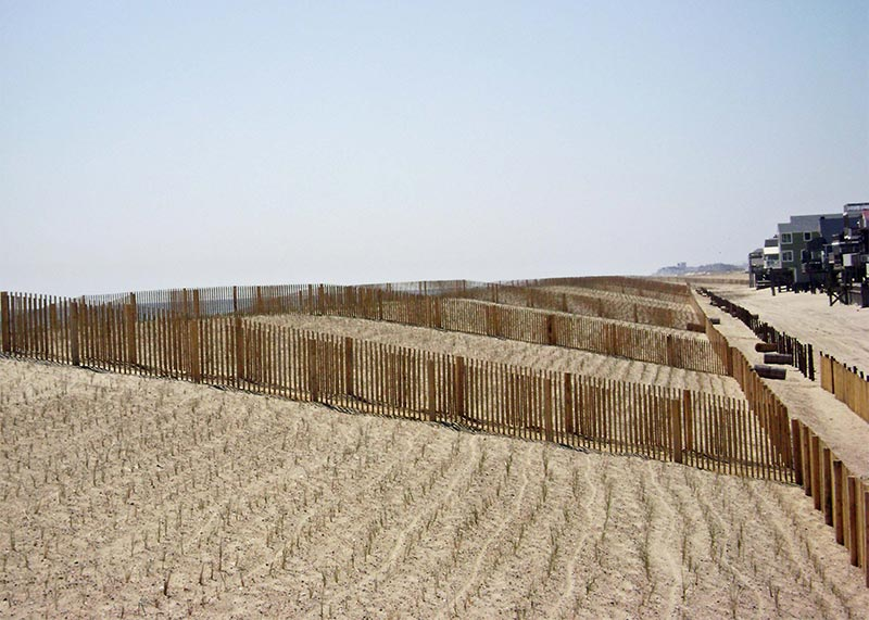 Newly planted and fenced dune