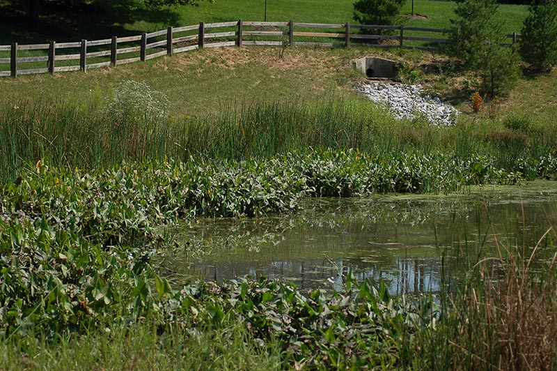 Summer following year 2 cattail control and supplemental planting