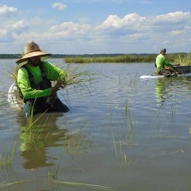 planting-wetlands-canoe-careers