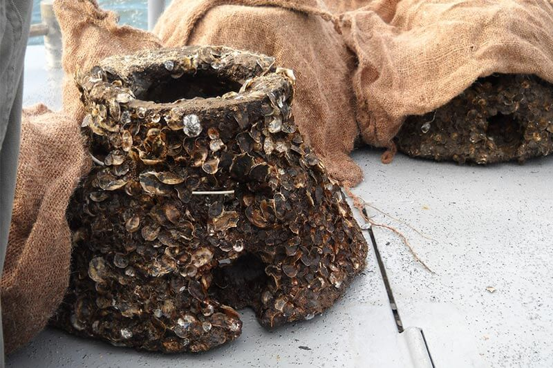 NYC Pilot Project Oysters pre spatted reefballs in transit to site