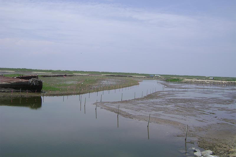 Poplar Island Center section of project during planting operation