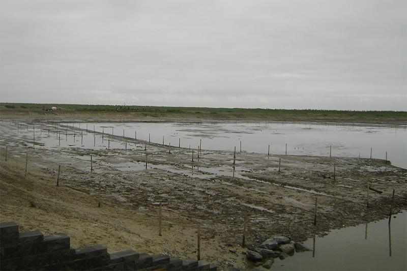 Poplar Island SE corner of project prior to planting