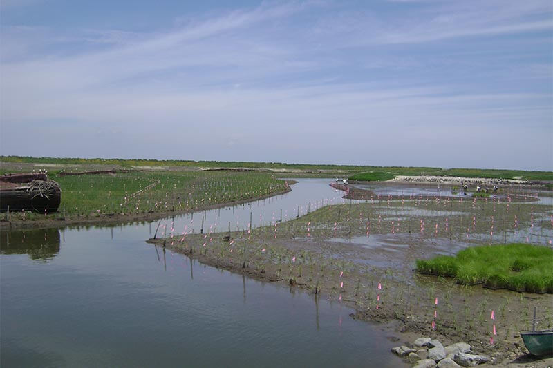 Poplar Island center section of project as planting is completed
