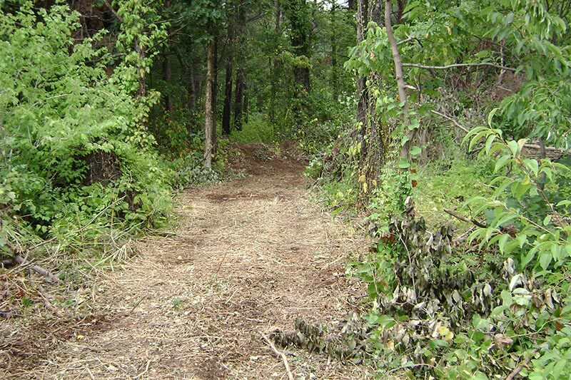 nature trail construction continued clearing of old path