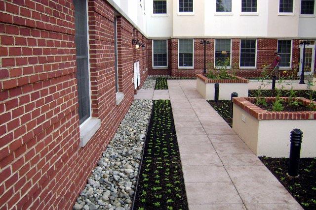 pickersgill-commercial-green-roof-1
