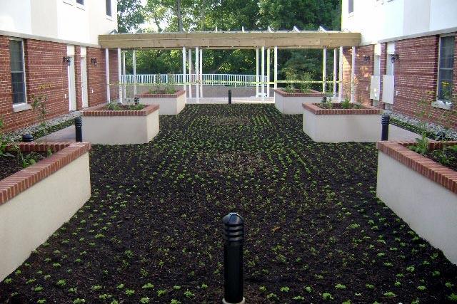 pickersgill-commercial-green-roof-3